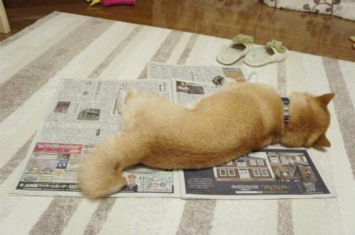 新聞紙一枚分
