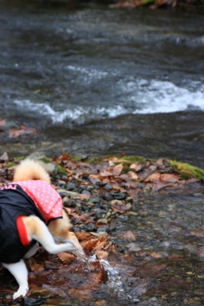たるきぃとなの川