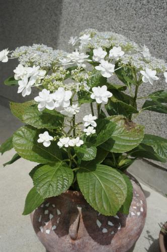 小学校の花