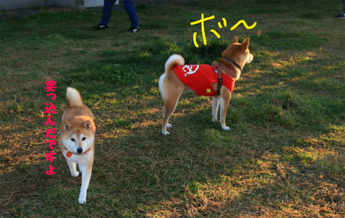 トキ&時子