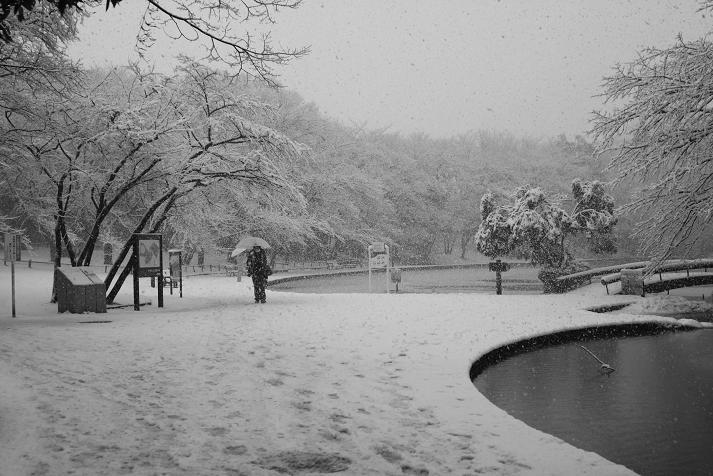 20130114初雪10a