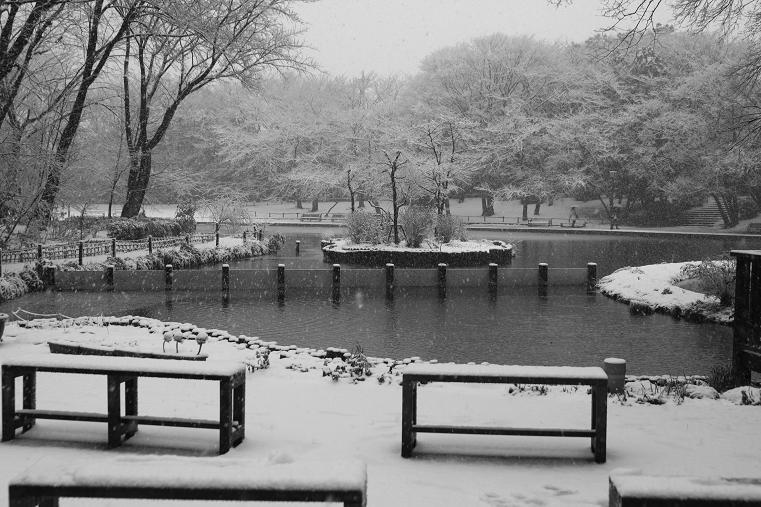 20130114初雪6a