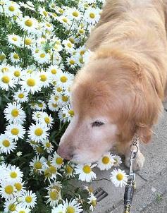 お花とステイ