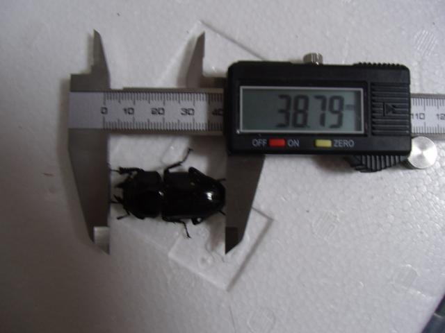 GEDC0044_convert_20121110222402.jpg