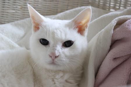 なんで猫用シャンプーに
