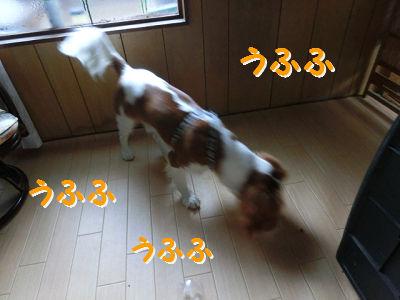 11-11-5.jpg