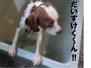 鬚ィ蜻・_convert_20121017151814