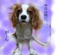 繧ャ繝シ繝ウ_convert_20121017151631