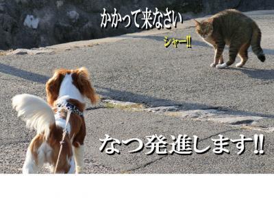 なつと猫_convert_20121018211440