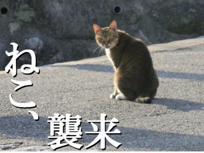 ねこ_convert_20121018211416