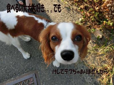 CIMG0024_convert_20121016154043.jpg