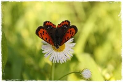 蝶々ものんびり~
