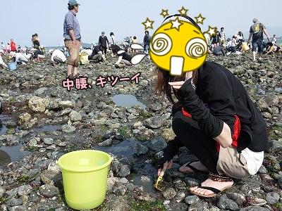 貝を掘って掘って~掘りまくります・・・キツー(汗)