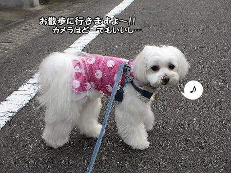 とりあえず、お散歩に行きましょー!