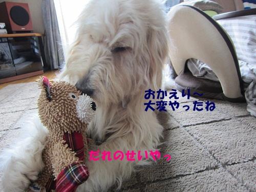 IMG_8732.jpg