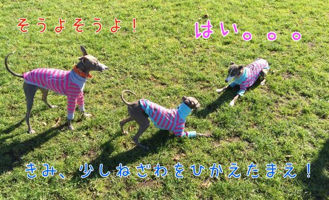 11IMG_7711.jpg