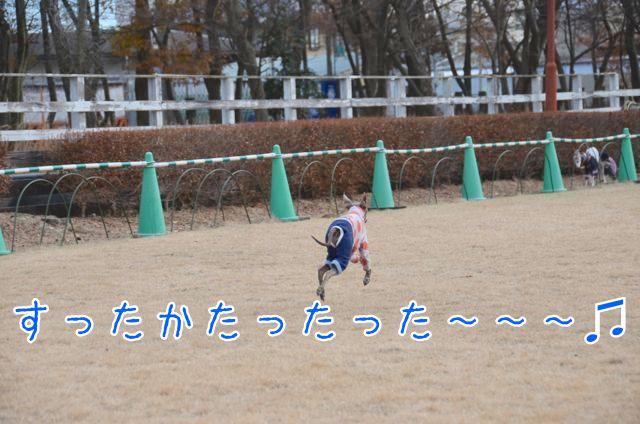 25DSC_5334.jpg
