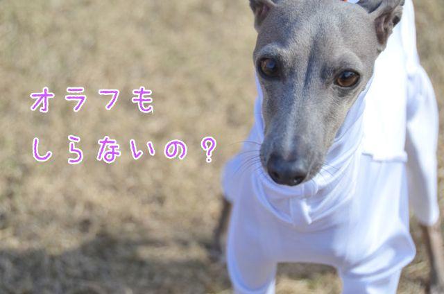 DSC_5225.jpg