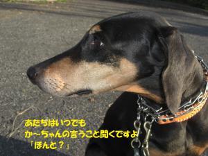 20121016さくら