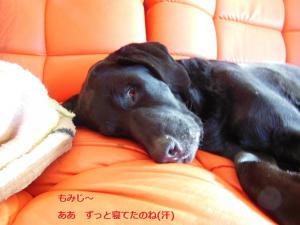 6-20130225もみじお疲れさん