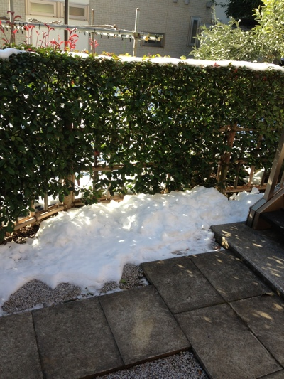 家の前の雪