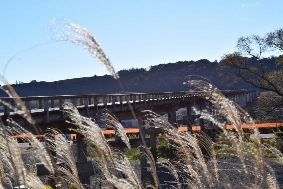 静岡県島田市 蓬莱橋