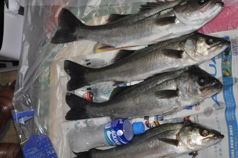 20130302川崎シーバス釣り2
