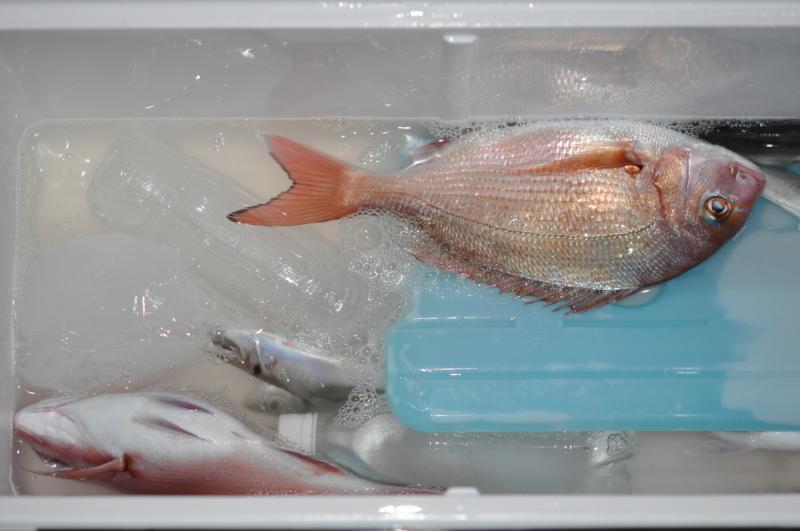 20130104鯛釣り1