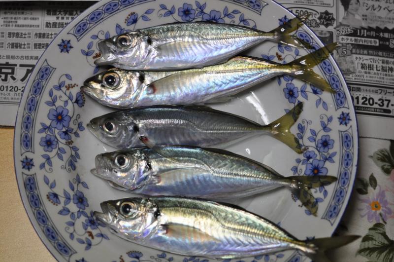 20130104鯛釣り3
