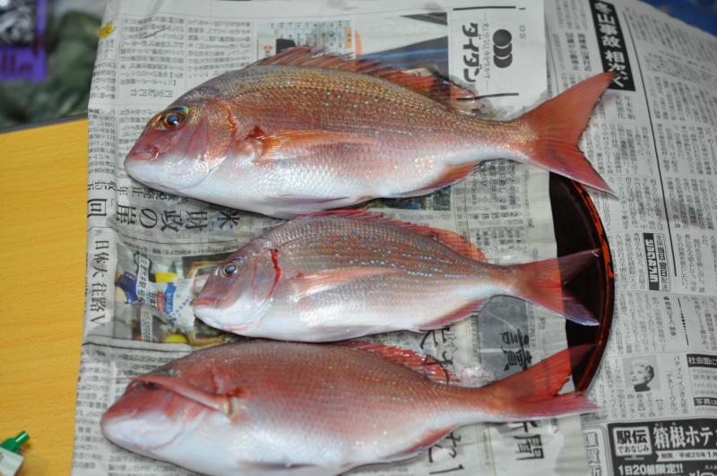 20130104鯛釣り2
