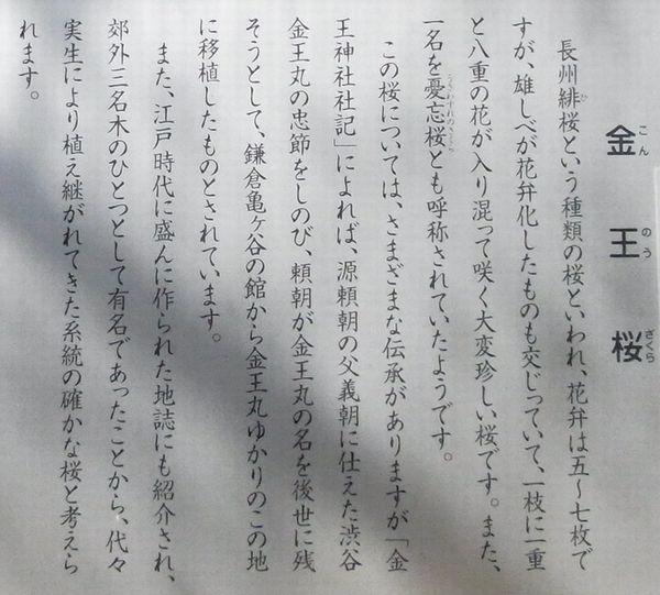 金王八幡神社13