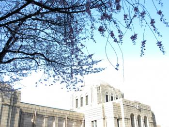 外苑の桜01