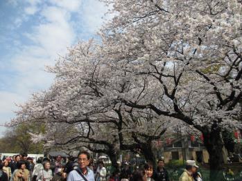 上野の花見1302