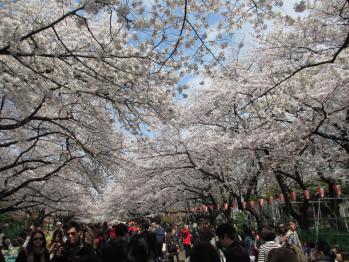上野の花見1304