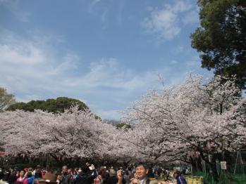 上野の花見1305