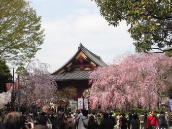 観音堂と枝垂桜