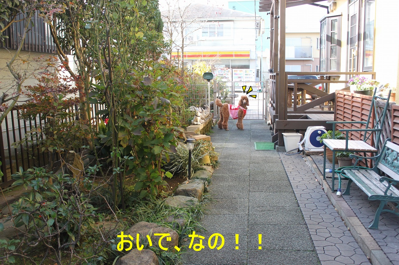 sh-014.jpg