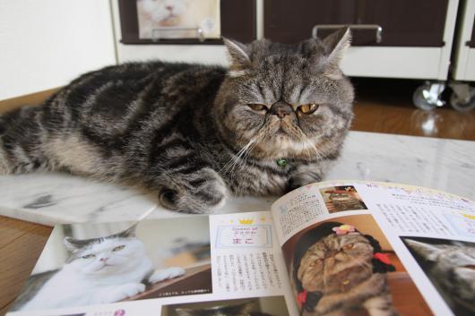 猫BOOK4