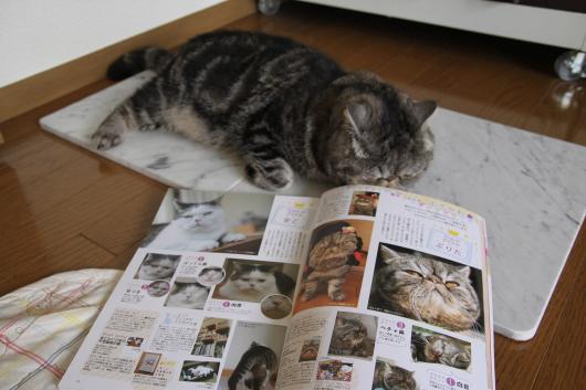猫BOOK3