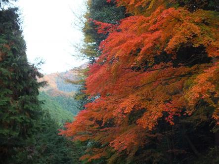 2012-11-13+(22)_convert_20121122104308.jpg