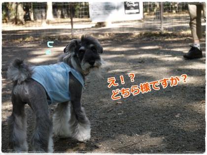 10_5+041_convert_20121006193813.jpg