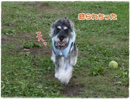 10_8+064_convert_20121009201351.jpg
