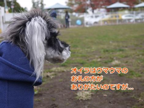 11_11+010_convert_20121112001733.jpg