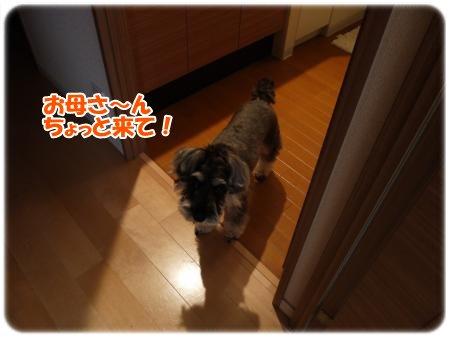4_27+011_convert_20120427184113.jpg