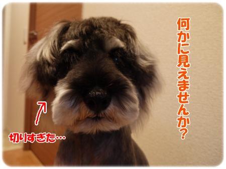4_27+022_convert_20120427184339.jpg
