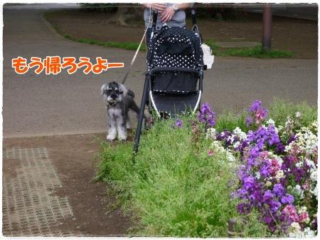 4_30+109_convert_20120501123715.jpg