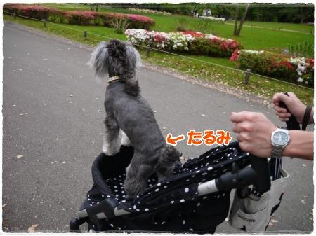 4_30+121_convert_20120501123916.jpg