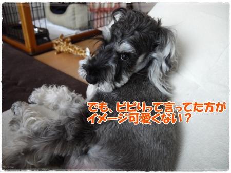 5_10+007_convert_20120510183740.jpg