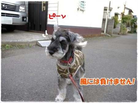 5_18+017_convert_201205181819162.jpg