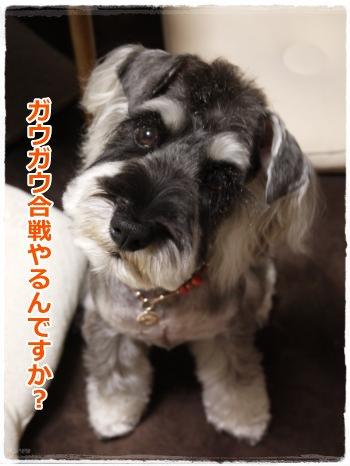 5_25+019_convert_20120525185926.jpg